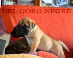 Cachorros de Hans y Fosca